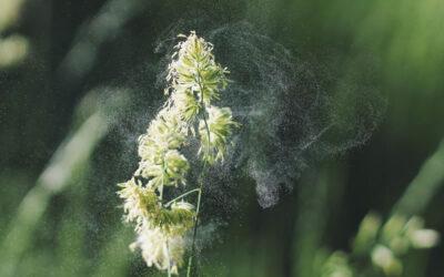 Alergia al polen, fiebre del heno o polinosis